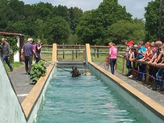 Visite d'Hipposea - COMPLET